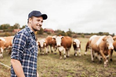 Bayer und World Farmers´ Organisation unterstützen mit Care4Cattle das Wohlergehen von Rindern; Bildquelle: Bayer Animal Health GmbH
