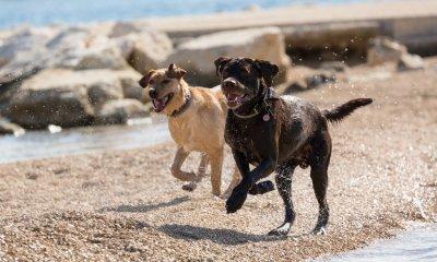 Hunde am Strand; Bildquelle: Bayer Austria