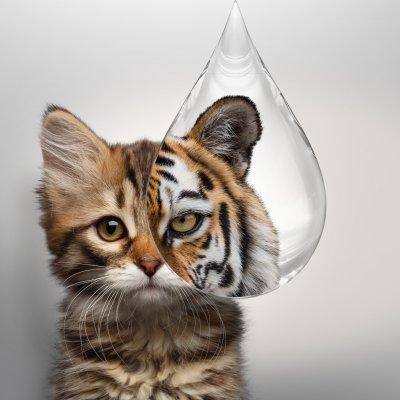 Kostenloser Diagnostik-Workshop zur Bestimmung von Katzenparasiten