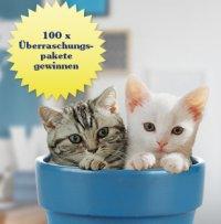 Tipps zur Katzenhaltung gewinnen; Bildquelle: Mars Petcare