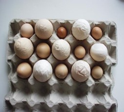 Missgebildete Eier infolge IB-Infektionen; Bildquelle: B. Oberländer, MSD Tiergesundheit