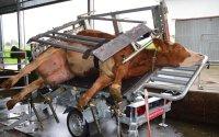 Behandlungs- und Operationsstand VET PRO für Rinder; Bildquelle: Rosensteiner