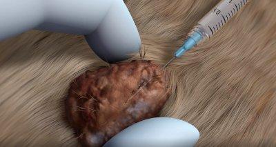 Video: Neue Behandlungsoption für Mastzelltumoren