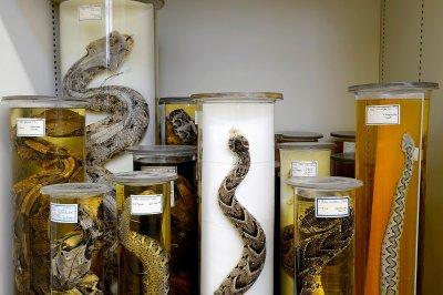 Herpetologische Sammlung; Bildquelle: NHM Wien, K. Kracher