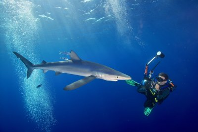 Sharknight Fotowettbewerb; Bildquelle: Gangoly/skills.at