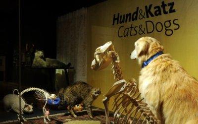 'Hund & Katz' - die neue Sonderausstellung im NHM Wien; Bildquelle: NHM/Alice Schumacher