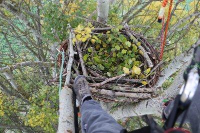 Kunsthorst: Weidenkorb für Überleben der Kaiseradler; Bildquelle: Birdlife/Knöpfler
