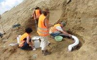 Das Paläontologen-Team des Naturhistorischen Museums bei der Bergung einer der Stoßzähne. Ein dünner Mantel aus Gipsbandagen dient zur Stabilisierung.; Bildquelle: NHM Wien