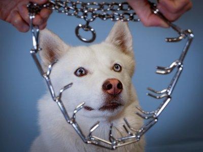 Aktion gegen Tierqual-Produkte; Bildquelle: Vier Pfoten