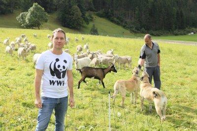 WWF-Experte Christian Pichler und Schäfer Thomas Schranz mit Schutzhunden und Zäunen; Bildquelle: Greber / WWF
