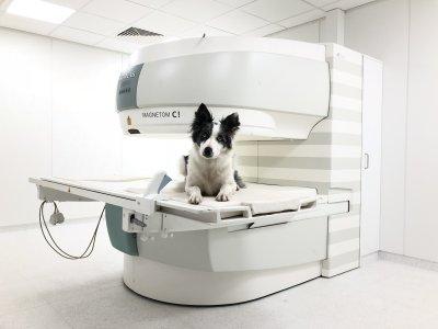 Vetpix - High-Tech-Diagnostik für Hunde und Kleintiere
