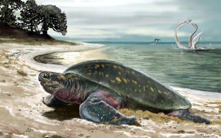 Älteste fossile Meeresschildkröte entdeckt - Schildkröte ist ...