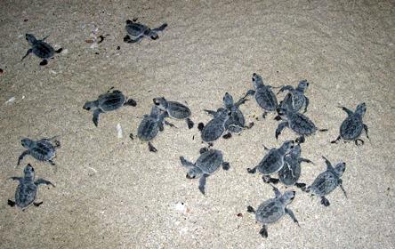 Erfolgreiche Meeresschildkröten-Nistsaison im Iran | VET-MAGAZIN.com